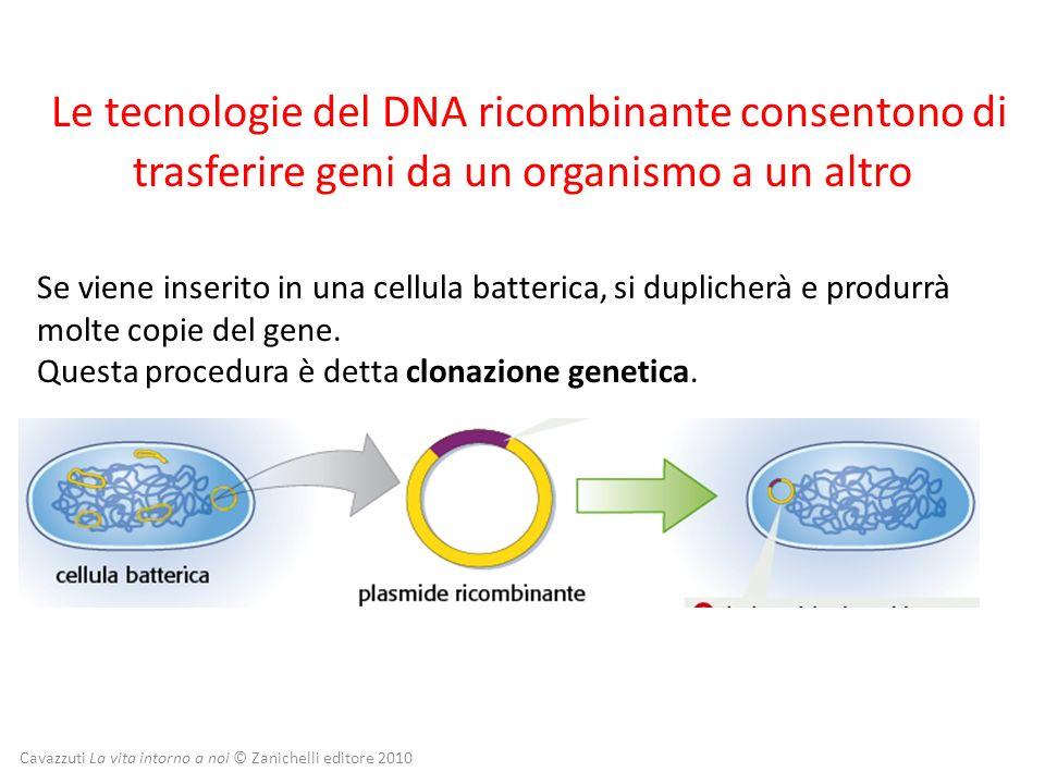 Le tecnologie del DNA ricombinante consentono di trasferire geni da un organismo a un altro