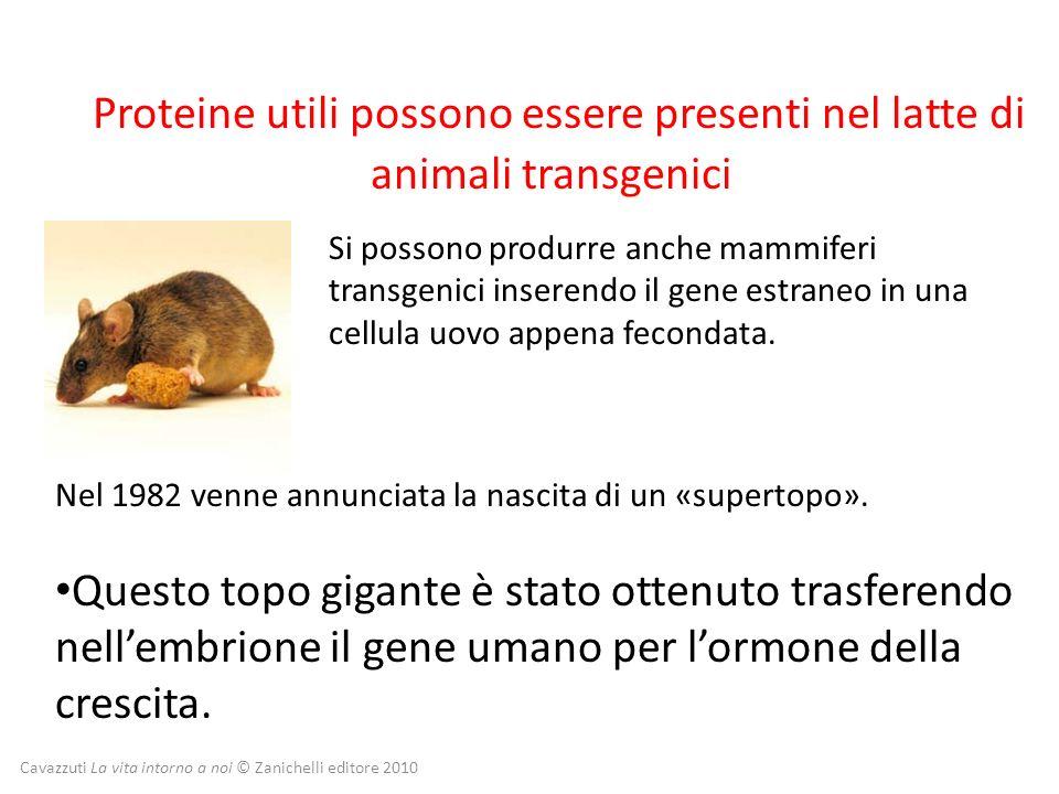 Proteine utili possono essere presenti nel latte di animali transgenici