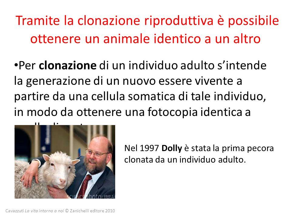 Tramite la clonazione riproduttiva è possibile ottenere un animale identico a un altro