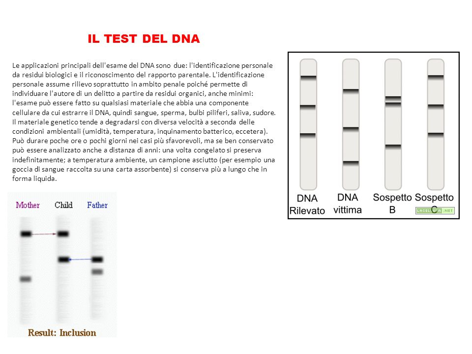 IL TEST DEL DNA