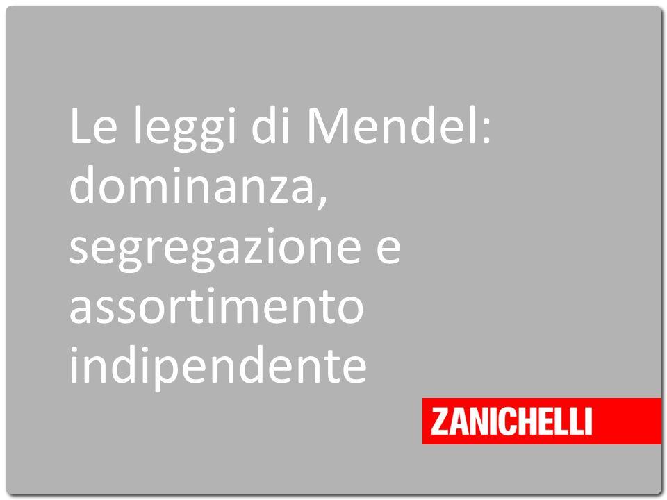 Le leggi di Mendel: dominanza, segregazione e assortimento indipendente