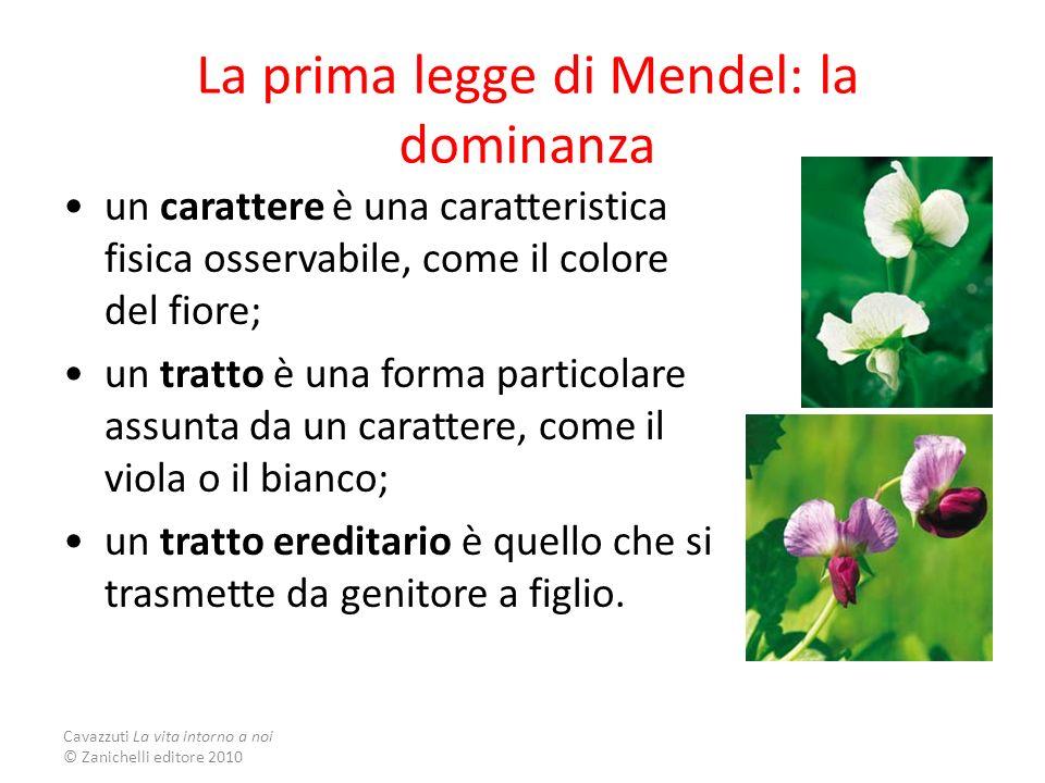 La prima legge di Mendel: la dominanza