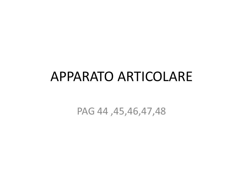 APPARATO ARTICOLARE PAG 44 ,45,46,47,48
