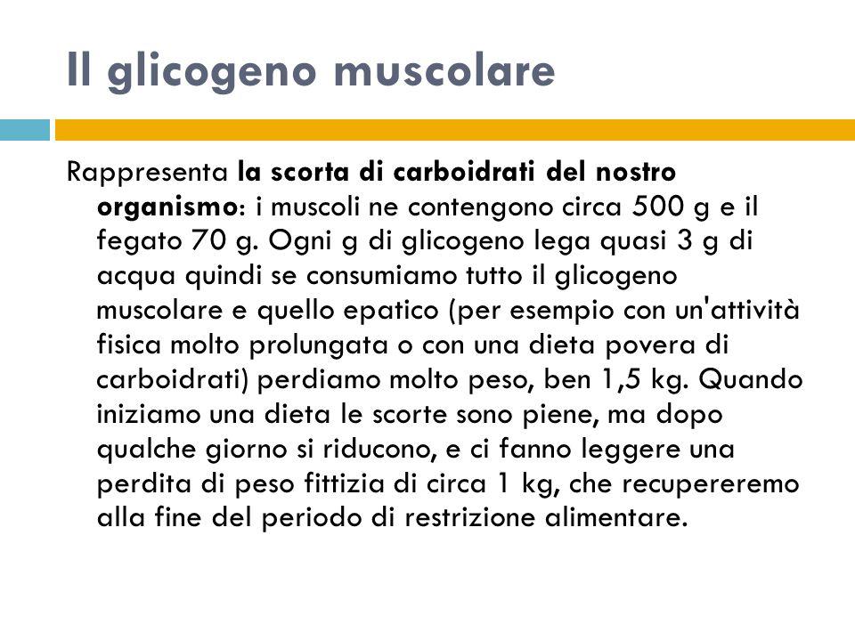 Il glicogeno muscolare