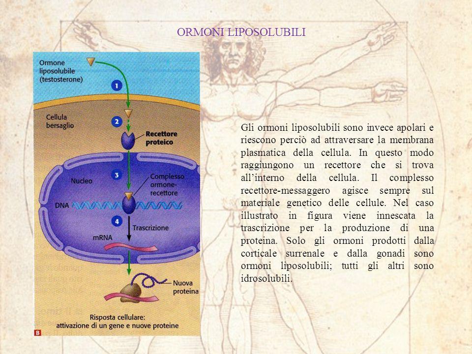 ORMONI LIPOSOLUBILI