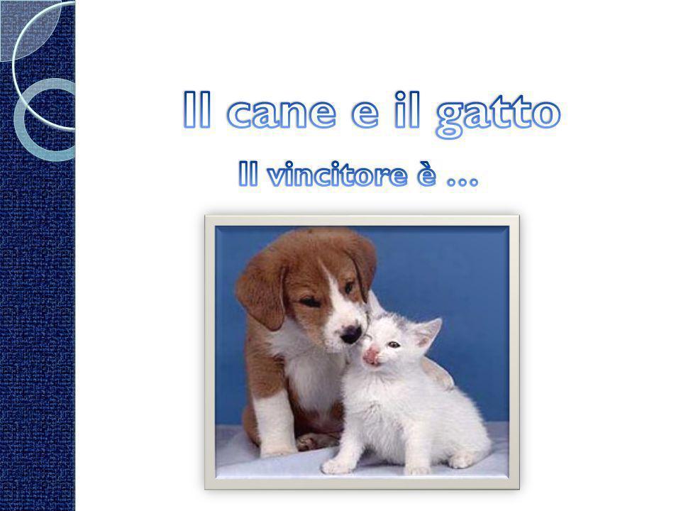 Il cane e il gatto Il vincitore è …