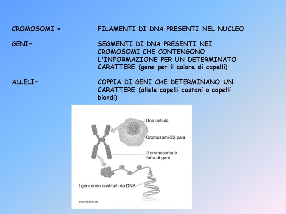 CROMOSOMI = FILAMENTI DI DNA PRESENTI NEL NUCLEO