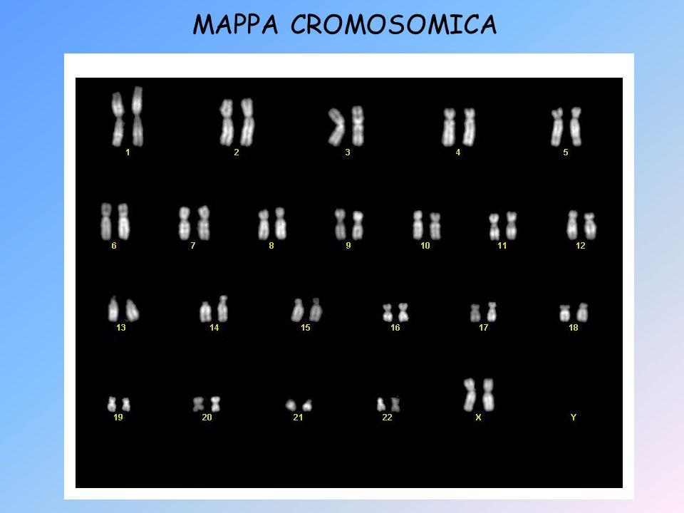 MAPPA CROMOSOMICA