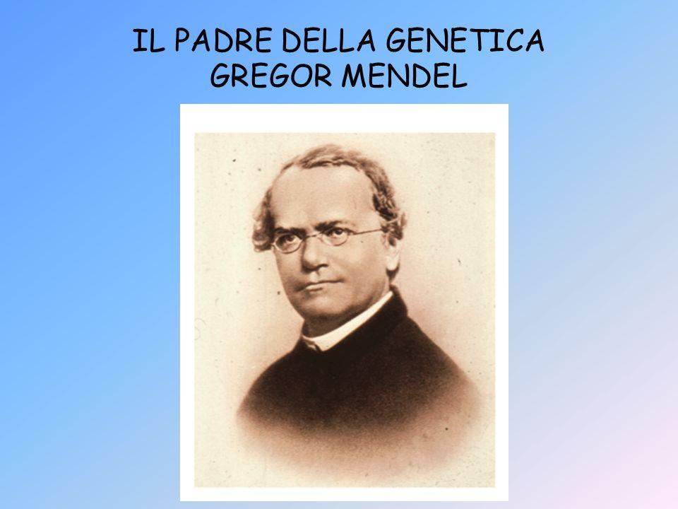 IL PADRE DELLA GENETICA GREGOR MENDEL
