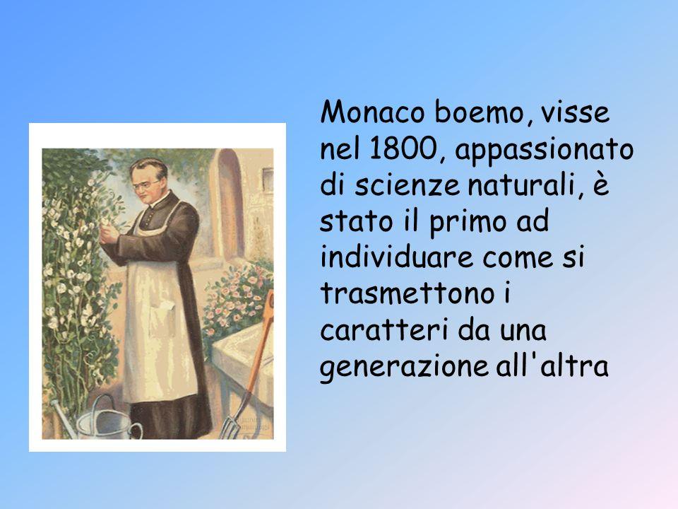 Monaco boemo, visse nel 1800, appassionato di scienze naturali, è stato il primo ad individuare come si trasmettono i caratteri da una generazione all altra