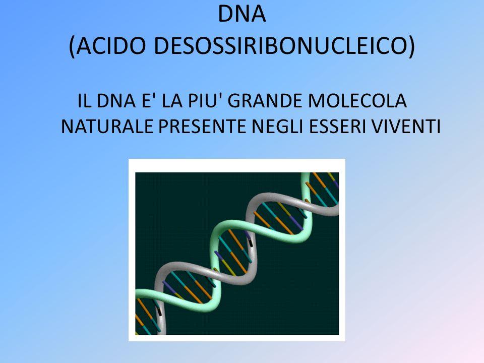 DNA (ACIDO DESOSSIRIBONUCLEICO)