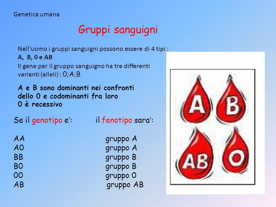 Gruppi sanguigni Se il genotipo e': il fenotipo sara': AA gruppo A