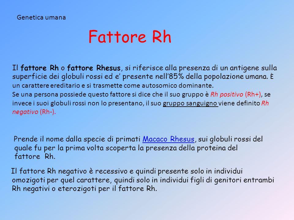 Fattore Rh Genetica umana