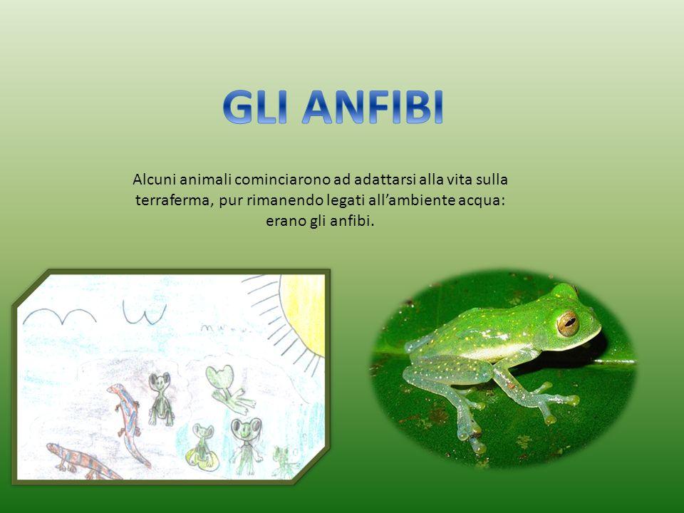 GLI ANFIBI Alcuni animali cominciarono ad adattarsi alla vita sulla terraferma, pur rimanendo legati all'ambiente acqua: erano gli anfibi.