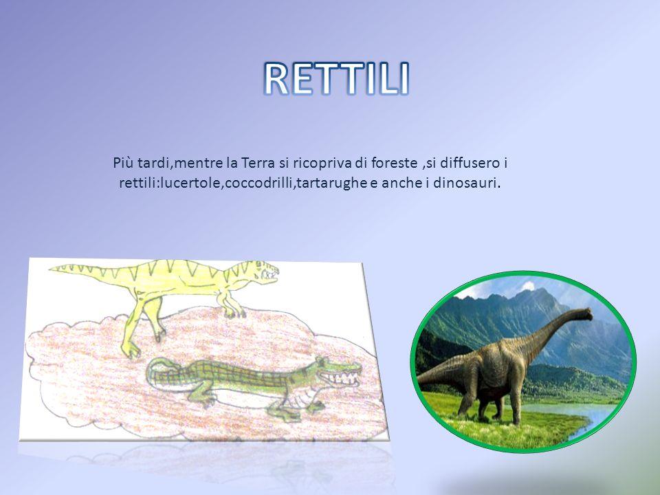 RETTILI Più tardi,mentre la Terra si ricopriva di foreste ,si diffusero i rettili:lucertole,coccodrilli,tartarughe e anche i dinosauri.