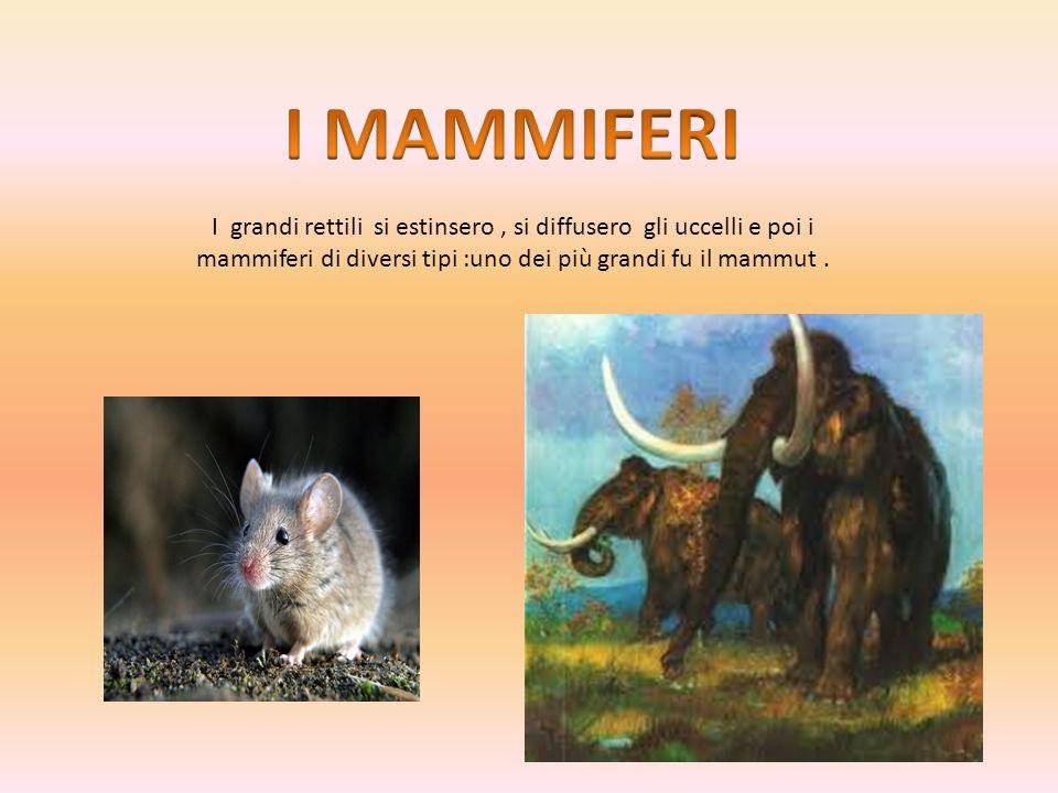 I MAMMIFERI I grandi rettili si estinsero , si diffusero gli uccelli e poi i mammiferi di diversi tipi :uno dei più grandi fu il mammut .