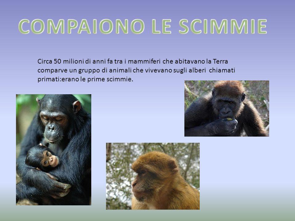 COMPAIONO LE SCIMMIE