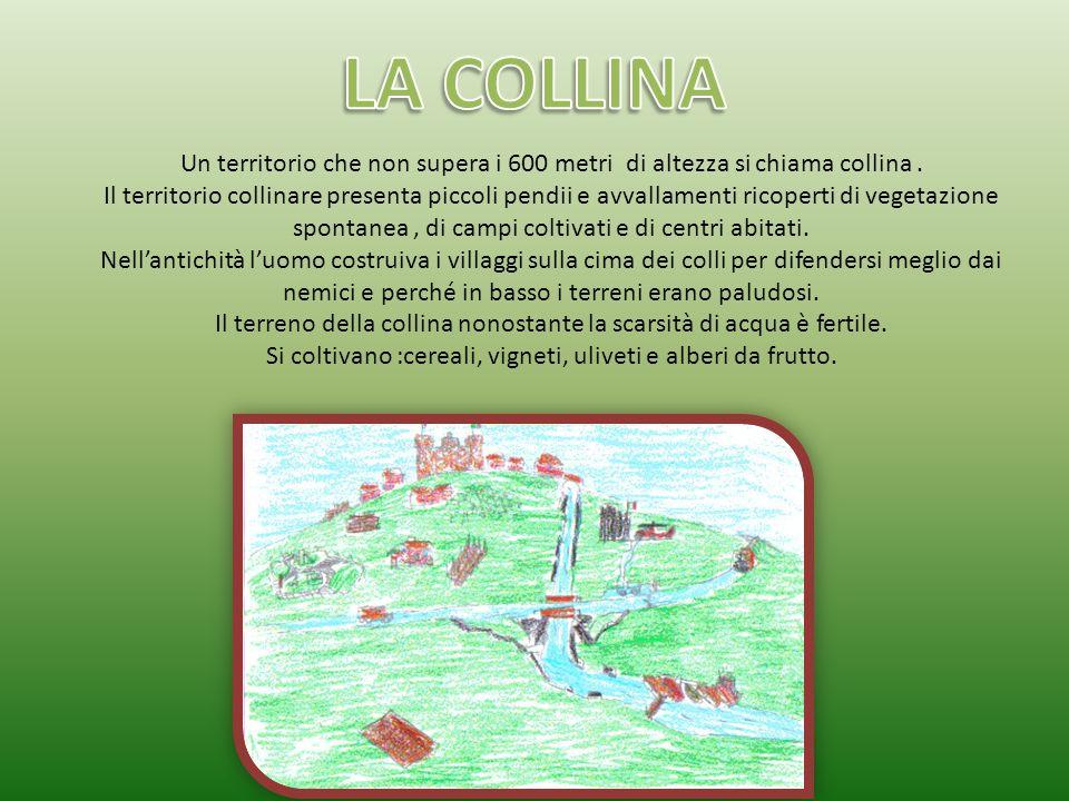LA COLLINA Un territorio che non supera i 600 metri di altezza si chiama collina .