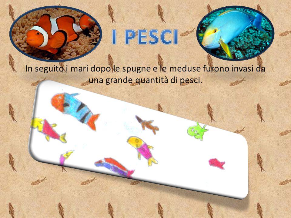I PESCI In seguito i mari dopo le spugne e le meduse furono invasi da una grande quantità di pesci.