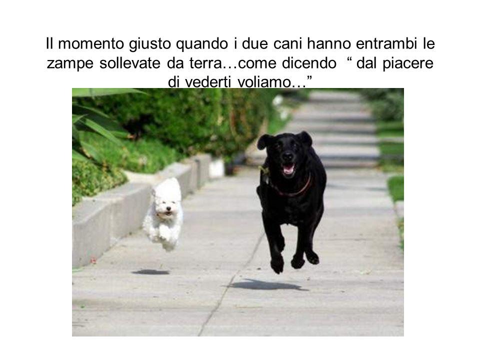 Il momento giusto quando i due cani hanno entrambi le zampe sollevate da terra…come dicendo dal piacere di vederti voliamo…