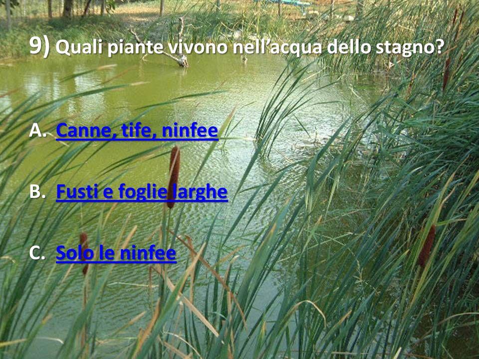 9) Quali piante vivono nell'acqua dello stagno