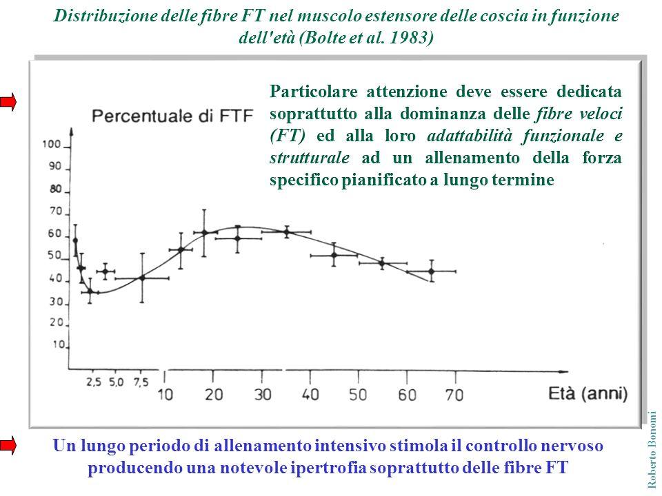Distribuzione delle fibre FT nel muscolo estensore delle coscia in funzione dell età (Bolte et al. 1983)