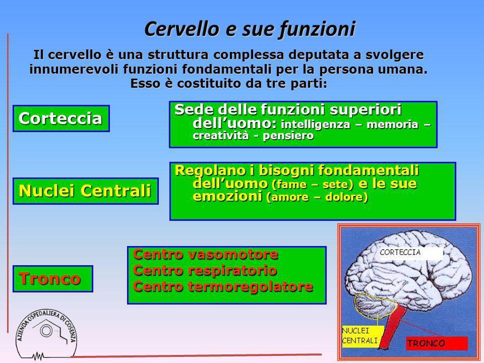 Cervello e sue funzioni