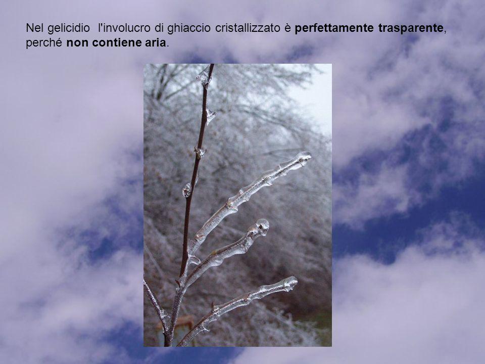 Nel gelicidio l involucro di ghiaccio cristallizzato è perfettamente trasparente, perché non contiene aria.