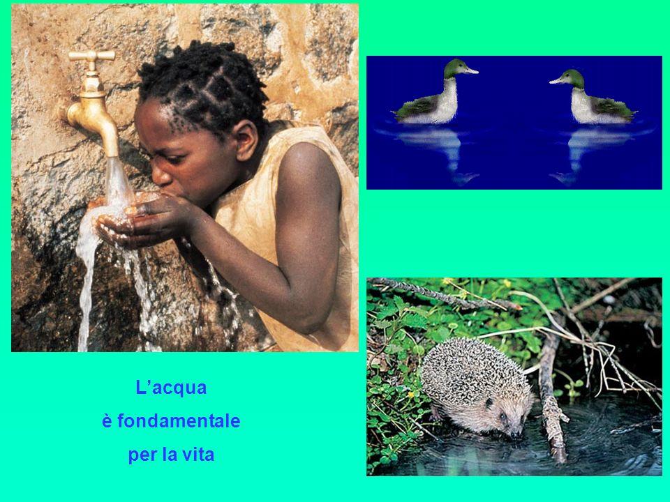 L'acqua è fondamentale per la vita