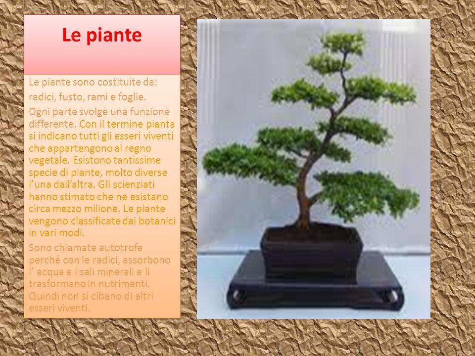 Le piante Le piante sono costituite da: radici, fusto, rami e foglie.