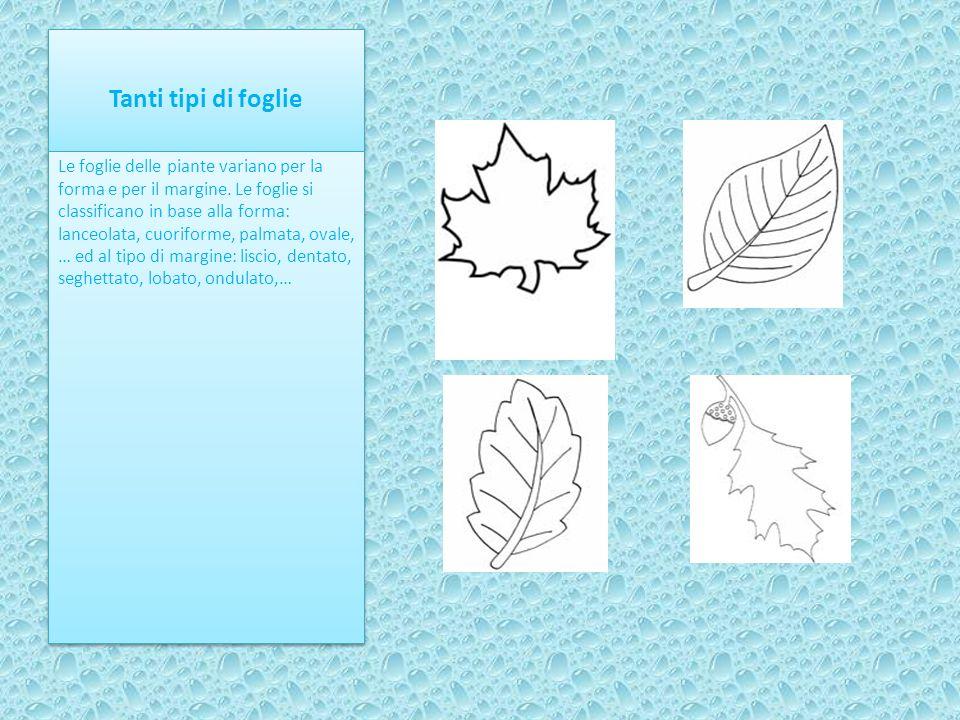 Tanti tipi di foglie