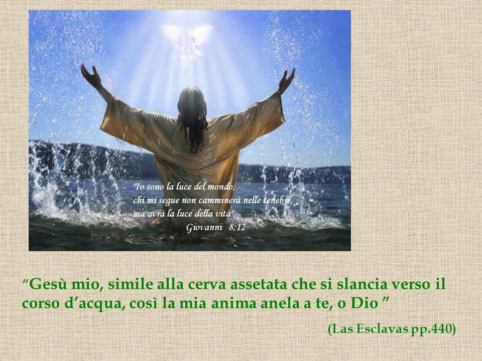 Gesù mio, simile alla cerva assetata che si slancia verso il corso d'acqua, così la mia anima anela a te, o Dio
