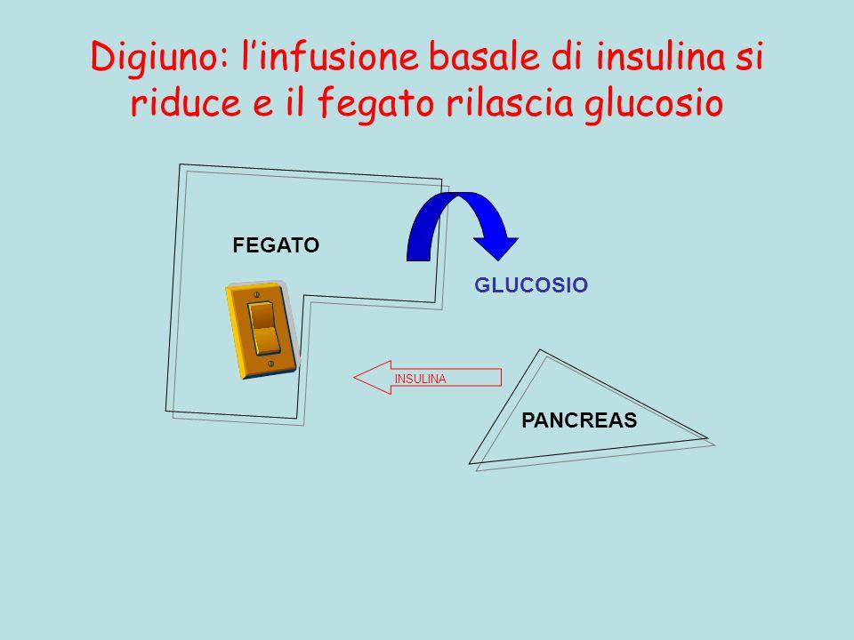 Digiuno: l'infusione basale di insulina si riduce e il fegato rilascia glucosio