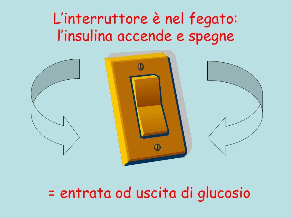 L'interruttore è nel fegato: l'insulina accende e spegne
