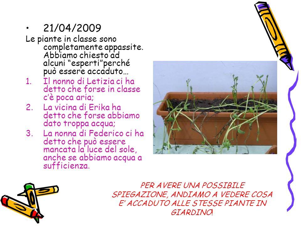21/04/2009 Le piante in classe sono completamente appassite. Abbiamo chiesto ad alcuni esperti perché può essere accaduto…