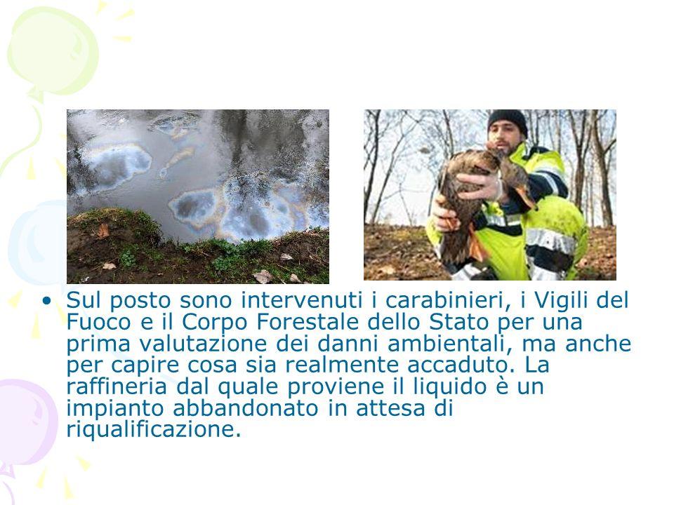 Sul posto sono intervenuti i carabinieri, i Vigili del Fuoco e il Corpo Forestale dello Stato per una prima valutazione dei danni ambientali, ma anche per capire cosa sia realmente accaduto.