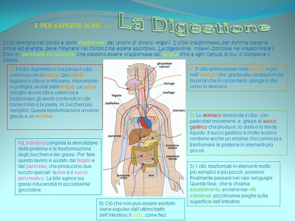 La Digestione E per saperne di più …
