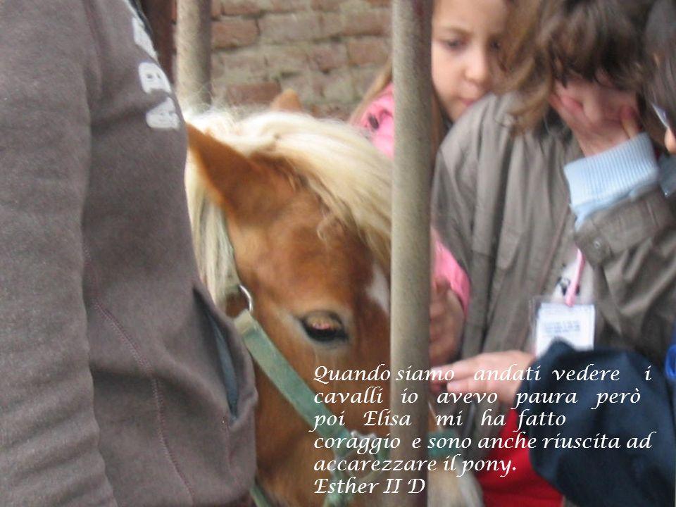 Quando siamo andati vedere i cavalli io avevo paura però poi Elisa mi ha fatto coraggio e sono anche riuscita ad accarezzare il pony.