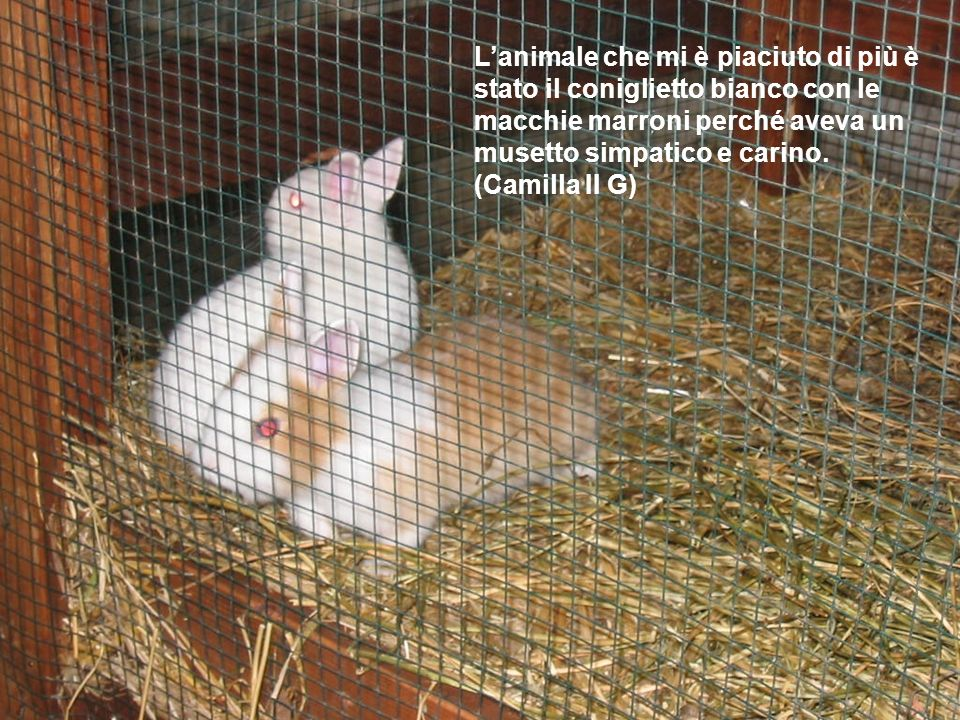L'animale che mi è piaciuto di più è stato il coniglietto bianco con le macchie marroni perché aveva un musetto simpatico e carino.