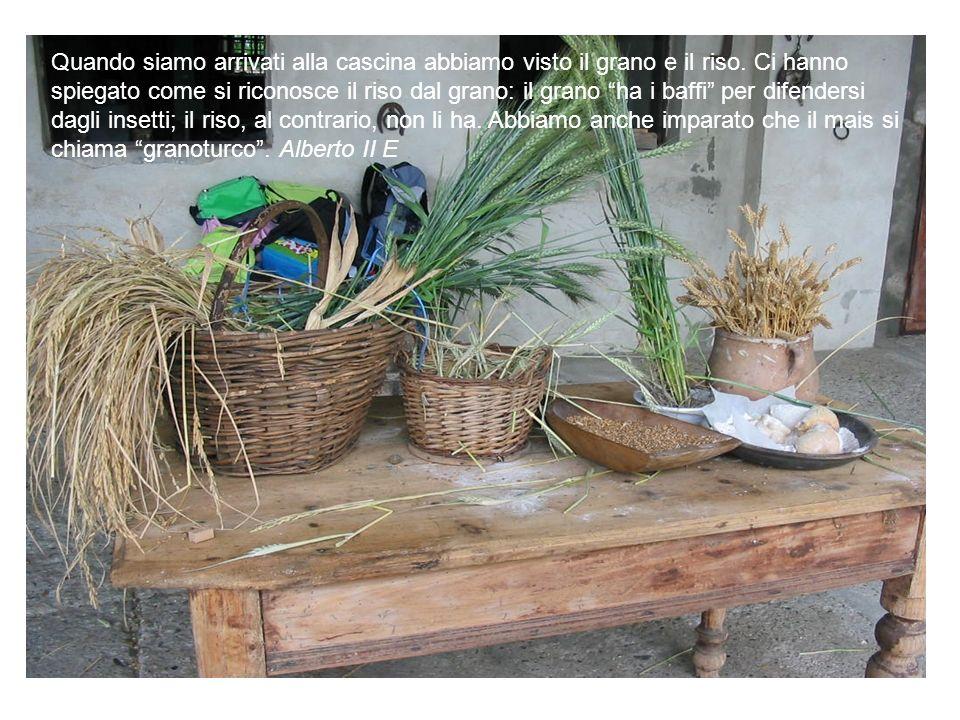 Quando siamo arrivati alla cascina abbiamo visto il grano e il riso