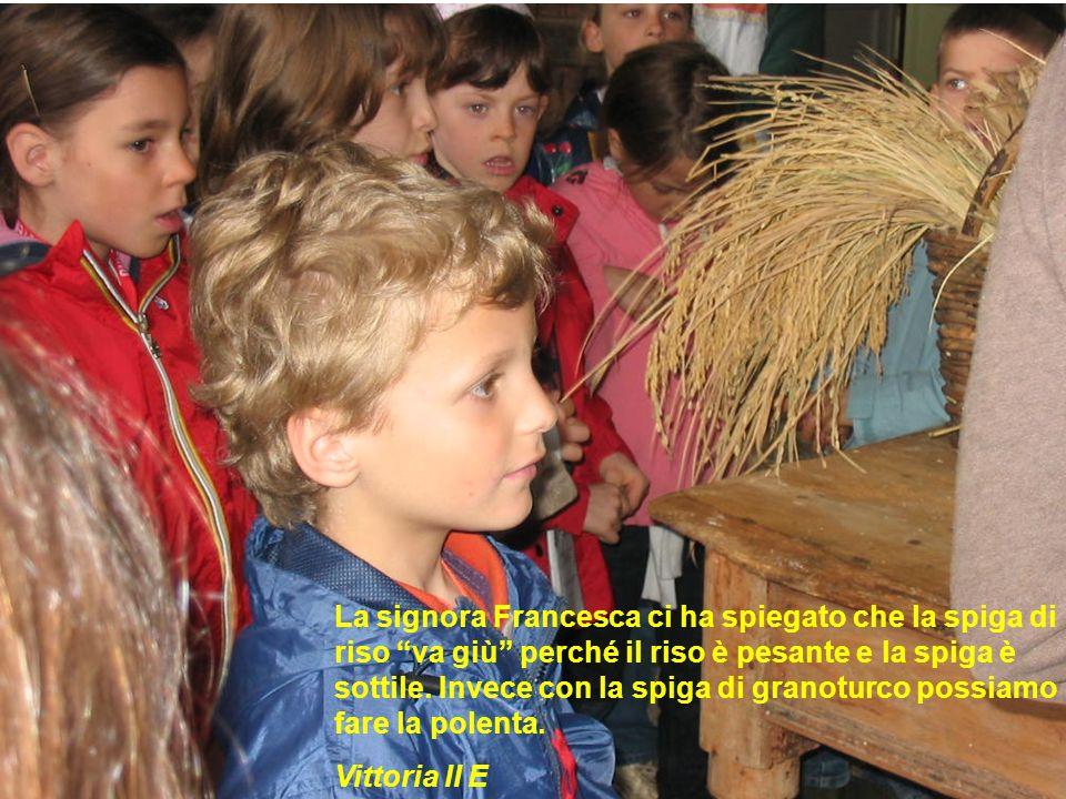 La signora Francesca ci ha spiegato che la spiga di riso va giù perché il riso è pesante e la spiga è sottile. Invece con la spiga di granoturco possiamo fare la polenta. Vittoria II E