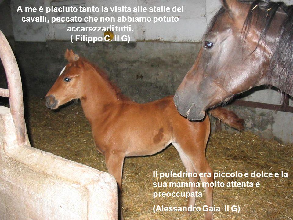A me è piaciuto tanto la visita alle stalle dei cavalli, peccato che non abbiamo potuto accarezzarli tutti. ( Filippo C. II G)