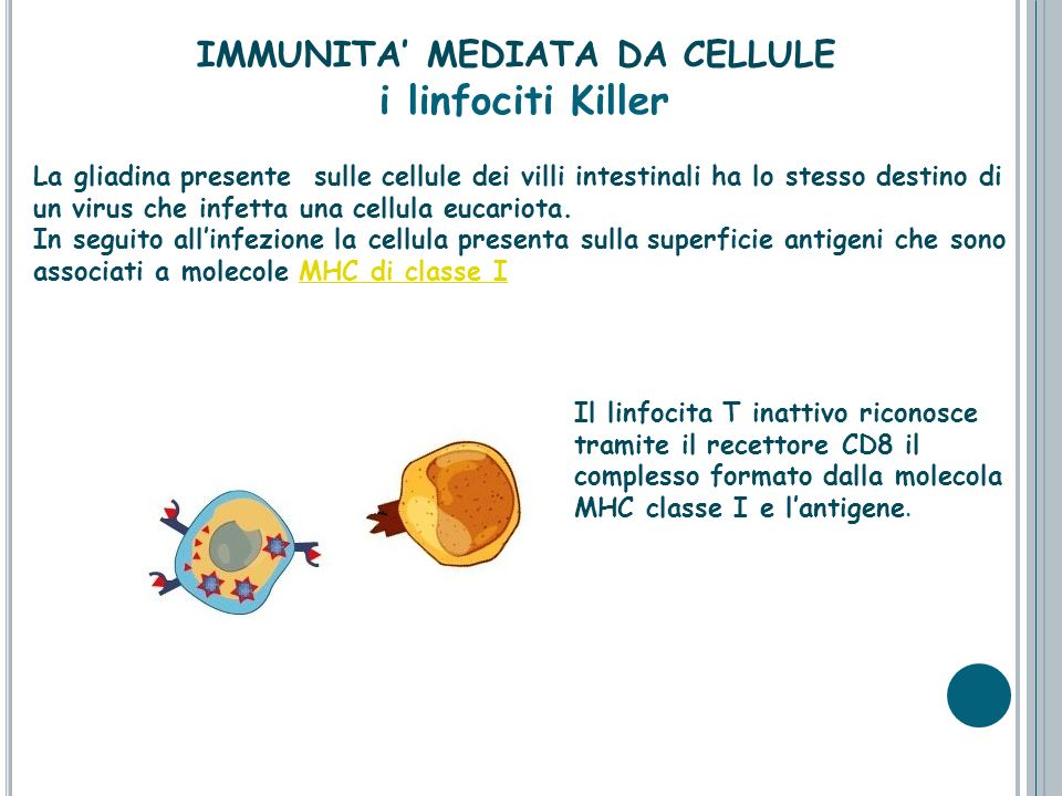 IMMUNITA' MEDIATA DA CELLULE i linfociti Killer