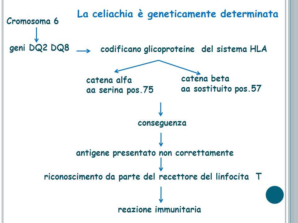 La celiachia è geneticamente determinata
