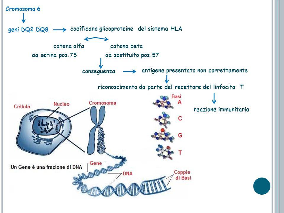 Cromosoma 6 codificano glicoproteine del sistema HLA