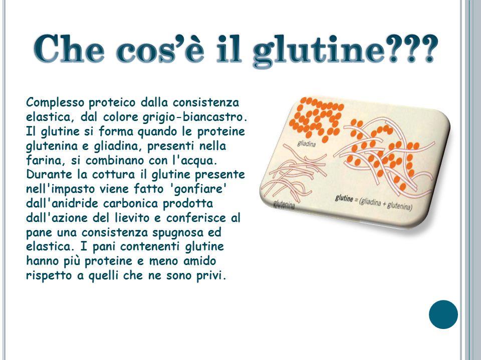 Che cos'è il glutine Complesso proteico dalla consistenza elastica, dal colore grigio-biancastro.