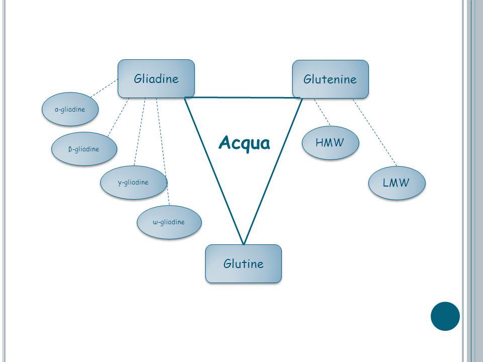 Acqua Gliadine Glutenine Glutine HMW LMW α-gliadine β-gliadine