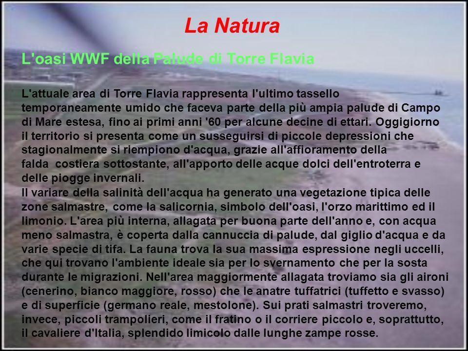 La Natura L oasi WWF della Palude di Torre Flavia