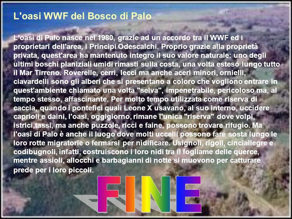 FINE L oasi WWF del Bosco di Palo