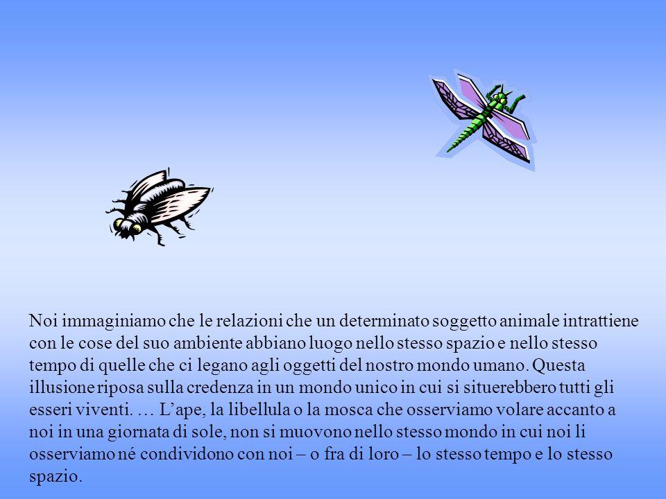 Noi immaginiamo che le relazioni che un determinato soggetto animale intrattiene con le cose del suo ambiente abbiano luogo nello stesso spazio e nello stesso tempo di quelle che ci legano agli oggetti del nostro mondo umano. Questa illusione riposa sulla credenza in un mondo unico in cui si situerebbero tutti gli esseri viventi. … L'ape, la libellula o la mosca che osserviamo volare accanto a noi in una giornata di sole, non si muovono nello stesso mondo in cui noi li osserviamo né condividono con noi – o fra di loro – lo stesso tempo e lo stesso spazio.